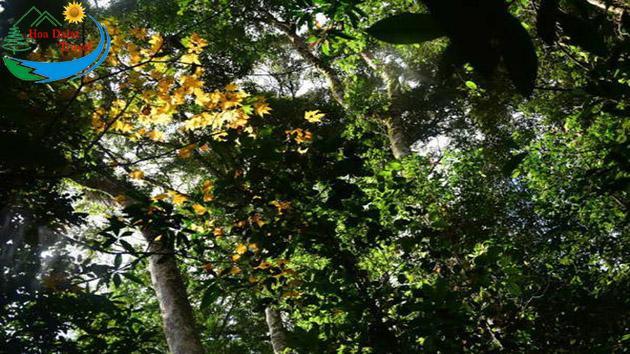 Rừng Lá Phong Bidoup Núi Bà