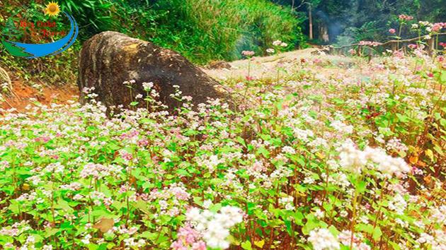 Tour Hoa Sơn Điền Trang Đà Lạt